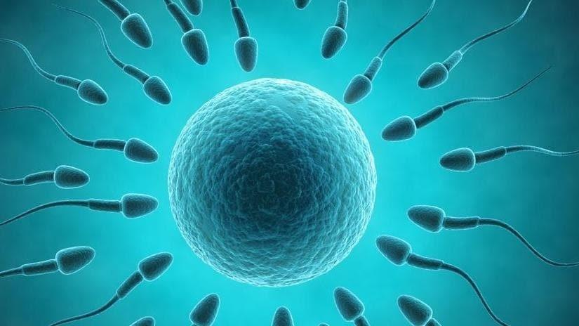Συμπτώματα Εγκυμοσύνης από Εξωσωματική Γονιμοποίηση 03d19411eb5