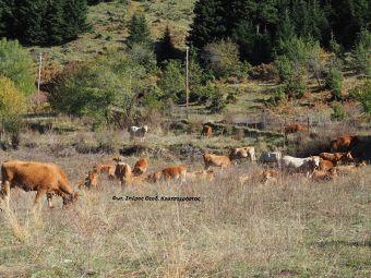 Σπ. Κουτσοχρήστος: Του Αγίου Δημητρίου, ημέρα σταθμός για τους μετακινούμενους κτηνοτρόφους