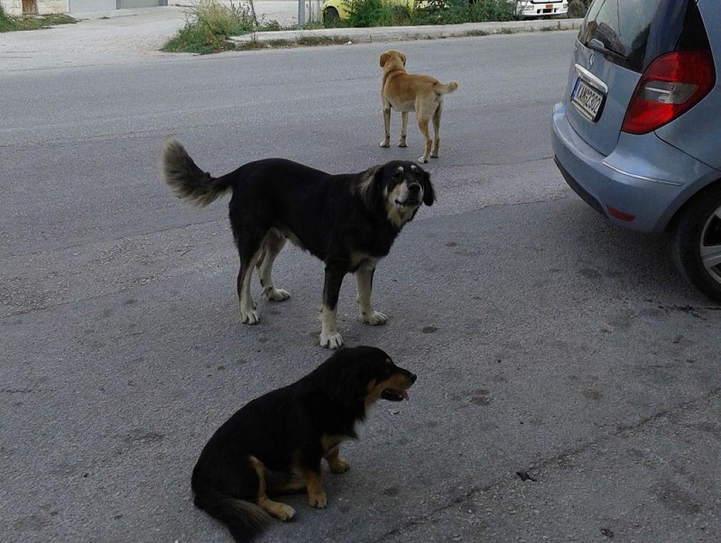 Η Περιβαλλοντική Οικολογική Παρέμβαση για την επίθεση σκύλου σε βάρος άνδρα στο Μουζάκι