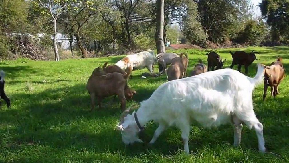 """Δ.Α.Ο.Κ. Καρδίτσας: """"Παράταση στην αδειοδότηση κτηνοτροφικών εγκαταστάσεων"""""""
