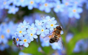 Προσπάθεια για δημιουργία του πρώτου, πανελλαδικά θεματικού πάρκου μέλισσας στο Ξινονέρι
