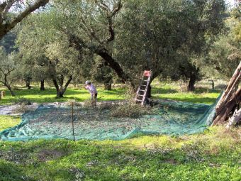 Δ.Α.Ο.Κ. Θεσσαλίας: Εγγραφή στο Φυτοϋγειονομικό Μητρώο - Διαδικασία γνωστοποίησης φυτοϋγειονομικών απαιτήσεων τρίτων χωρών