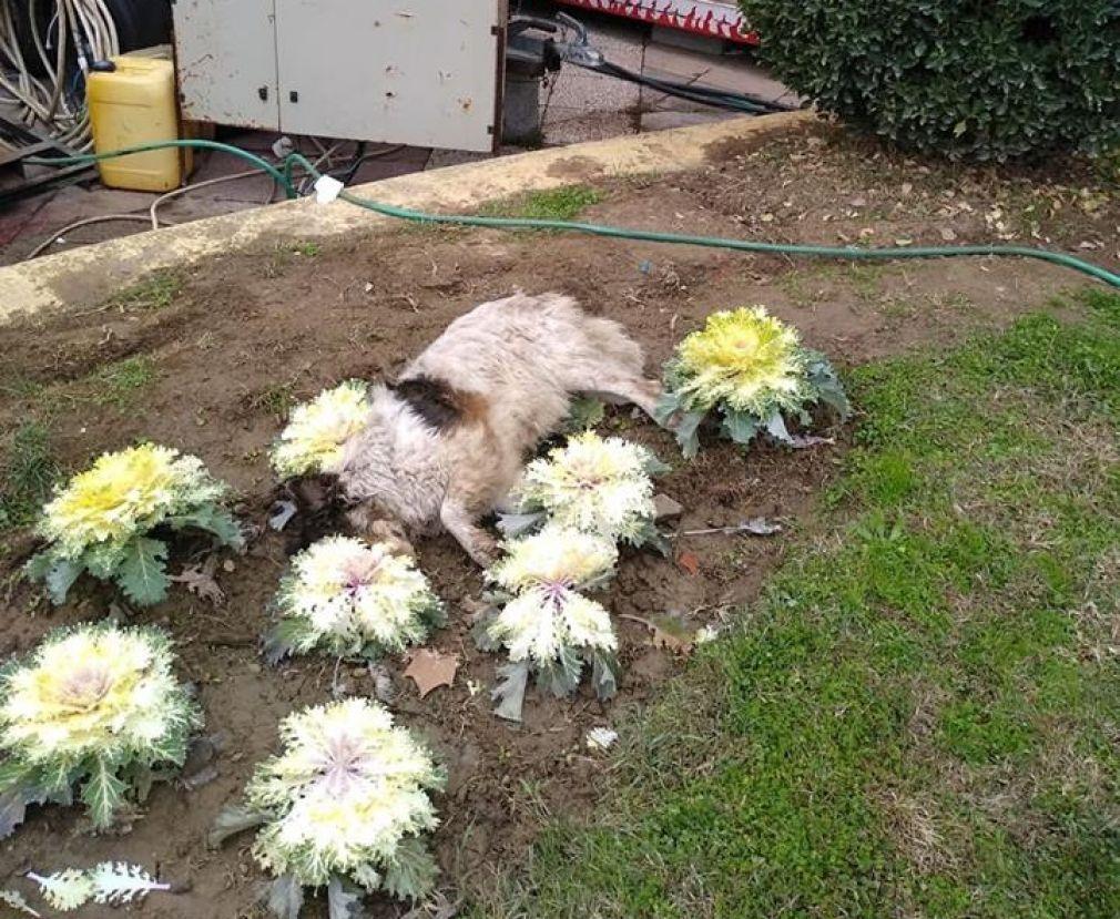 Νεκρά ζώα στο Παυσίλυπο από ασυνείδητο που έριξε φόλες (+Φώτο)