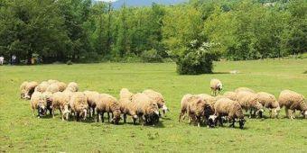 Ενημέρωση κτηνοτρόφων για την κατανομή των επιλέξιμων βοσκοτόπων έτους 2019 στη Π.Ε. Καρδίτσας