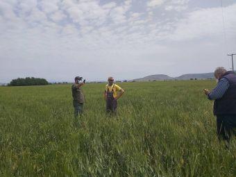 Εκτεταμένες ζημιές σε καλλιέργειες σιτηρών στο Δήμο Σοφάδων διαπίστωσε κλιμάκιο του ΕΛΓΑ